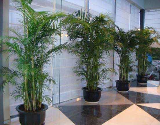 公司植物租赁