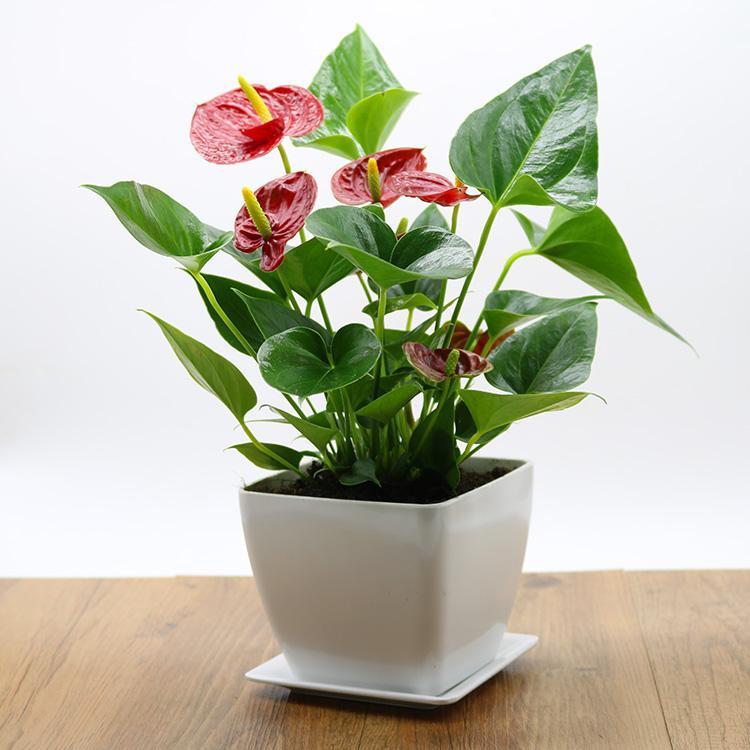 江阴花卉租摆的好处有哪些呢?