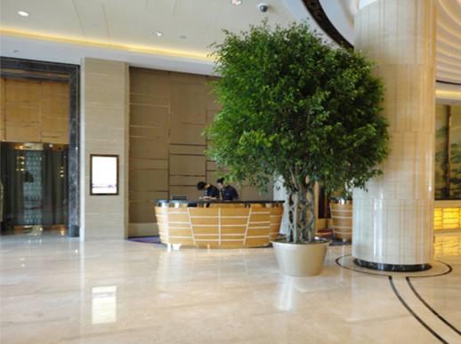 酒店绿植租赁