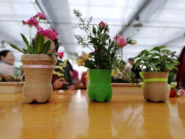 学校植物租赁