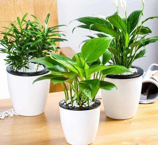 植物花卉租赁